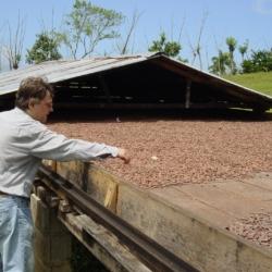Cuckoo Ice-Cream, Kakaoplantage
